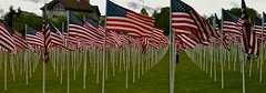 Memorial Day Flags