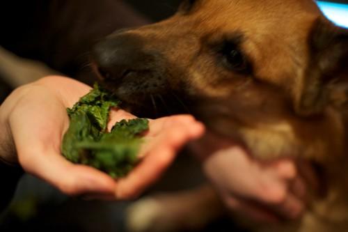 Dogs like kale, too