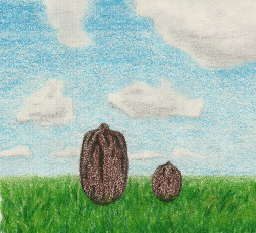 pecans do not hope for much by Giant Hamburger