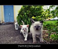 GATINHOS - Kittens
