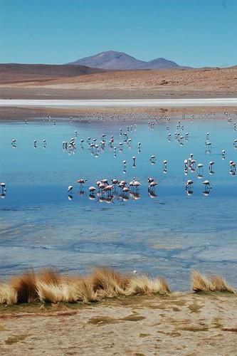 Bolivia altiplano lagoon