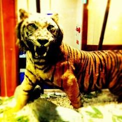 今日は信貴山で、忘年会。宴会場に、虎がいた…。