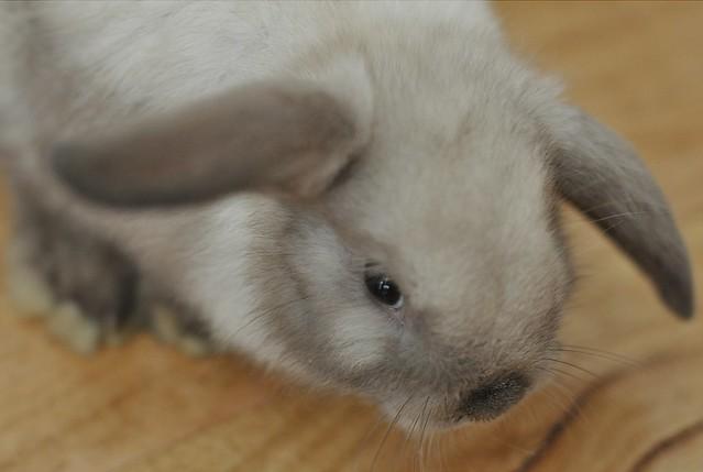 Thumper 1