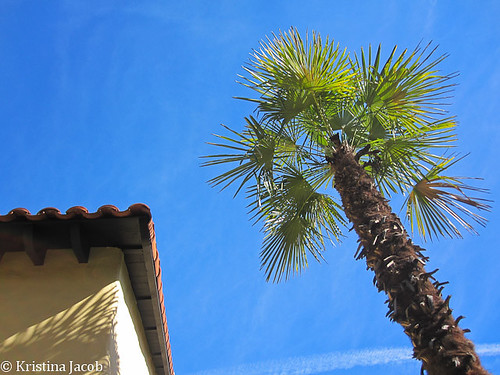 Palm building