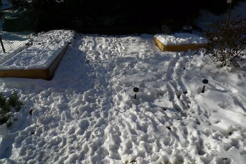Snowbound Garden