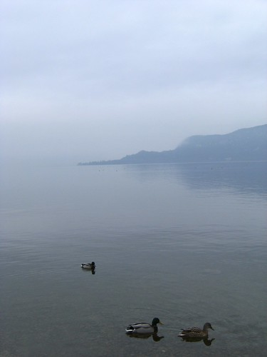 san vigilio and ducks in cristal clear water