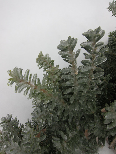 Ice-covered shrub