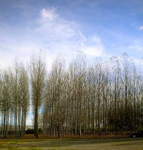 arbres9