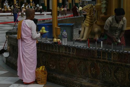 Ofrenda monja en Shwedagon Pagoda