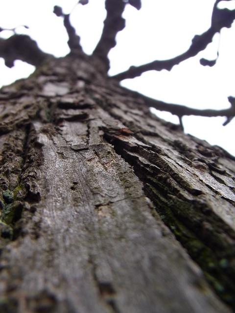 Barking Up The Tree