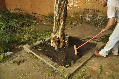 cuidando da pitangueira (Eugenia uniflora L.)...