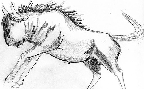 Gnu - pencil drawing by Ulla Hennig