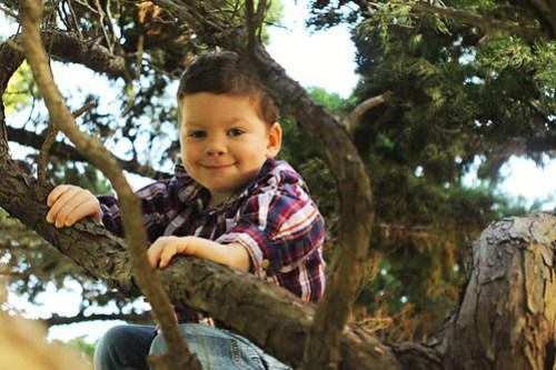 monkey in a tree copy