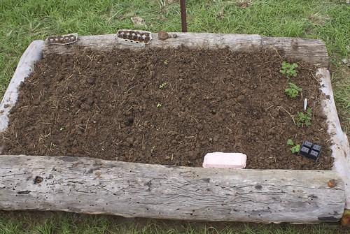 Bed #2 - initial plantings