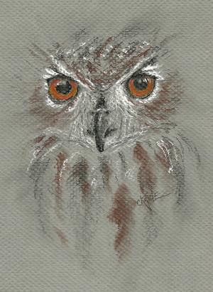 20110428_owl_eyes