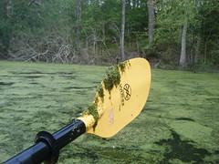 Clogged Paddle