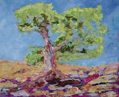 Holm Oak, Ikaria 2