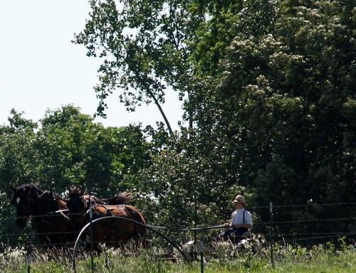 Amish Field Work 3