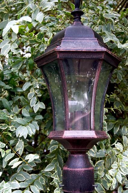 Bush Lamp