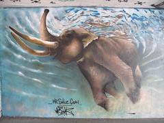 Elephant swimming, graffiti by Shiz