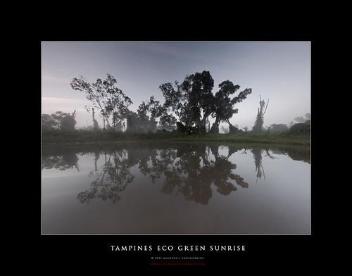 Tampines Eco Green Sunrise 17-04-2011 #7