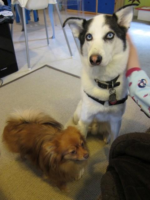 Comfort Dogs