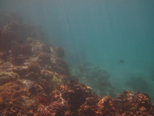 Maluaka Coral