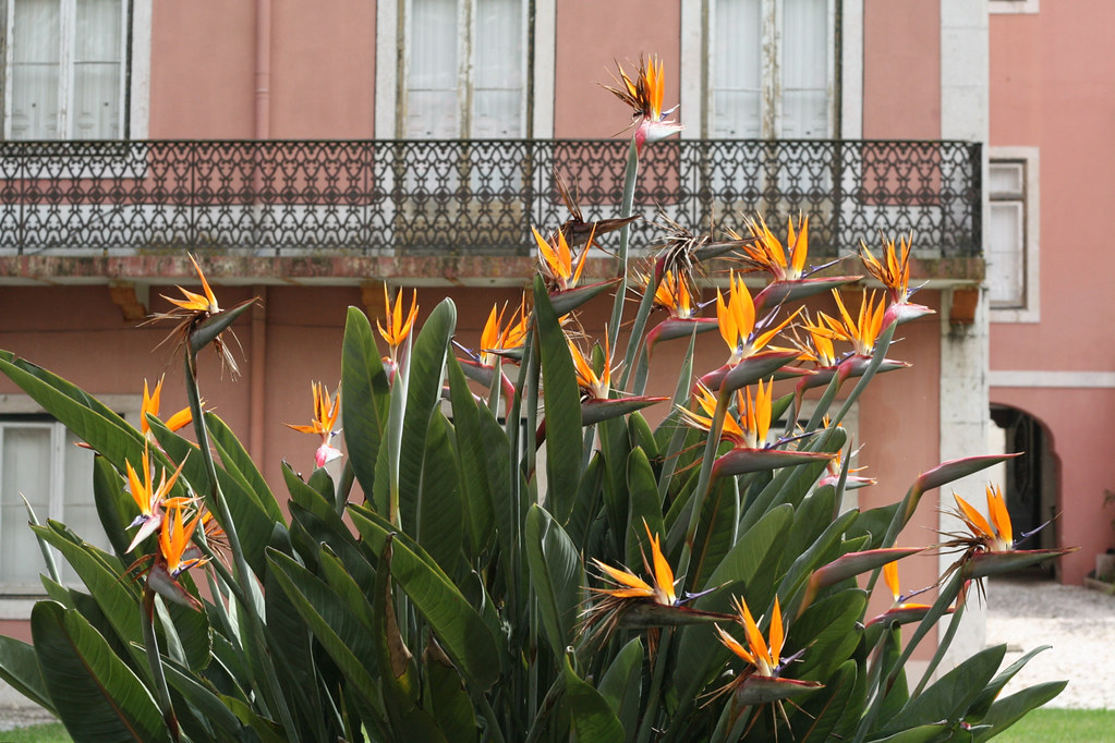 lisbon in bloom :: late march