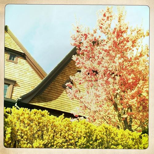 random flowering tree