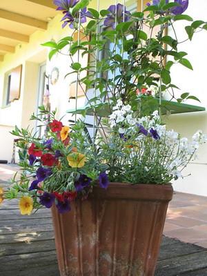 Garten_22.05.11_007_klein