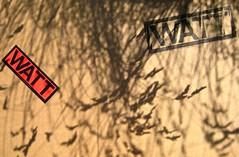WATT http://www.wattmagazine.it/, 12
