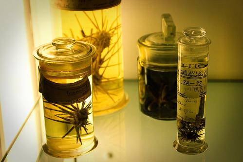 Prinocida-Natural-History-Museum