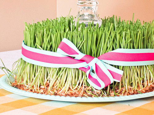 wheatgrass centerpiecee