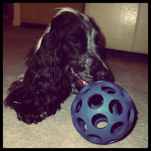 Bill and his ball.