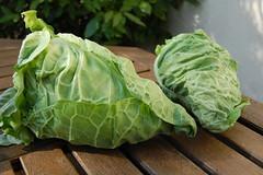 110502-cabbage1777