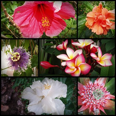 Thai-flowers