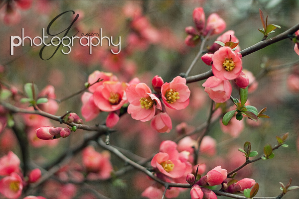 Apr032011_0093 copy