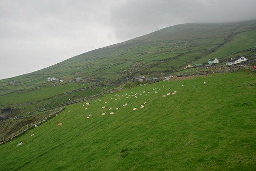 Hills of Sheep
