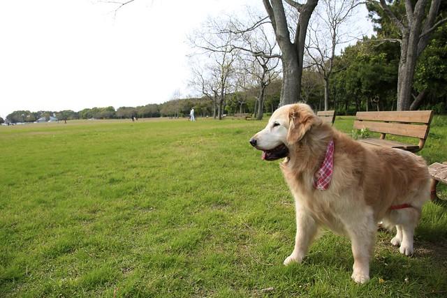 Nakatajima Park with a dog