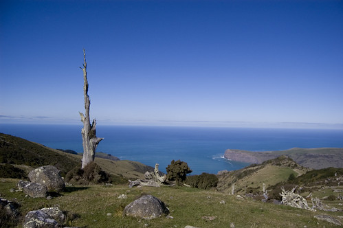 Dead trees and the Pacific Ocean - Banks Peninsula by Steph Jennings