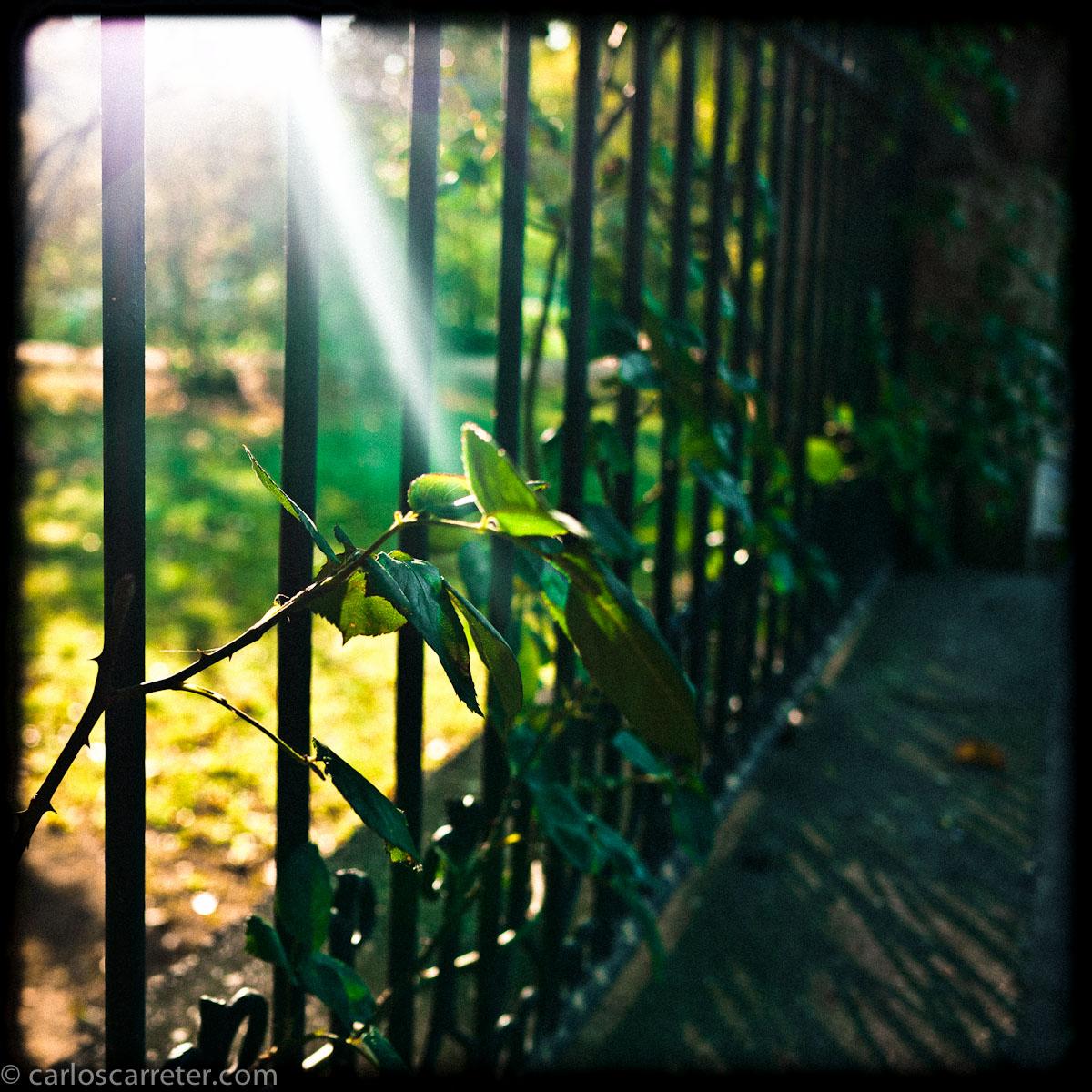 En la verja del Botánico