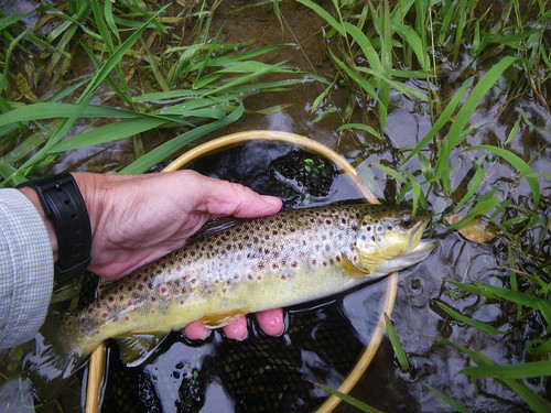 Fly Fishing for Wild Trout in Baltimore County