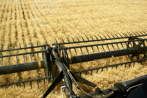 View from combine cab.