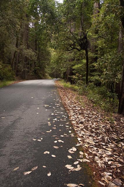 Big Basin Road