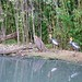 Austin Roberts Bird Sanctuary 1