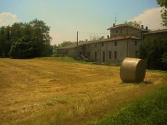 Felino area