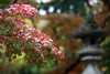 Photo:Tinted Autumnal Leaves / 紅葉(もみじ) By