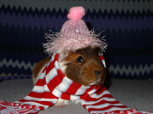 Wrapped up warm...