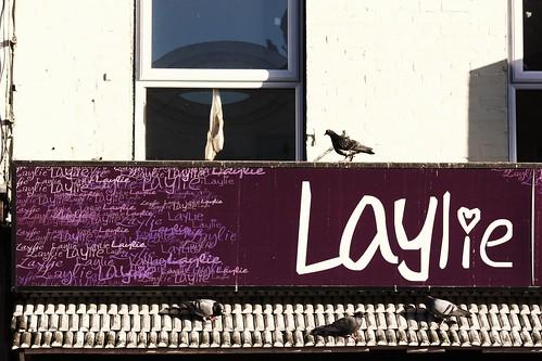 Laylie Birds