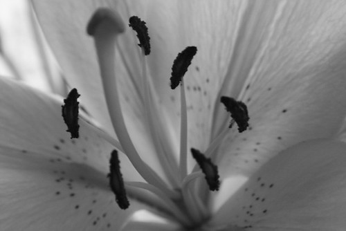 More Lilies 02